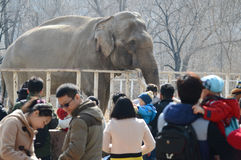 Visitors and zoo elephant Stock Image