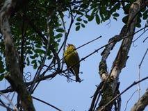 Viska i träden Royaltyfri Fotografi