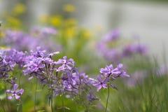 Viskning av våren Arkivfoto