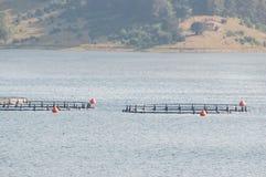 Viskwekerij in Bulgarije stock afbeeldingen