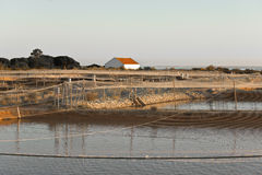 Viskwekerij op Atlantische kust Royalty-vrije Stock Foto's