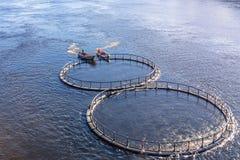Viskwekerij op de rivier Mensen op de bootveerboot de kooi met vissen aan een nieuwe plaats royalty-vrije stock afbeelding