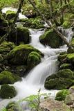 visni реки Стоковое фото RF