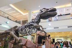 Visning och folk för dinosaurie som skelett- håller ögonen på på varuhuset royaltyfri foto