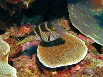 Vissen 1 van het koraal Stock Afbeeldingen
