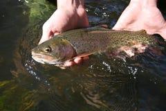 vissen #2 Royalty-vrije Stock Foto's