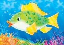 Vissen vector illustratie