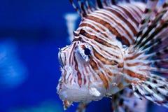 Vissen 3 Royalty-vrije Stock Afbeeldingen