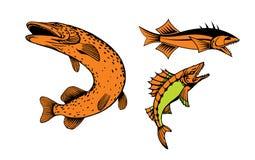 Vissen Royalty-vrije Stock Afbeeldingen