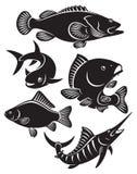 Vissen Stock Afbeelding