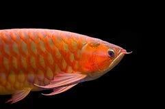 Vissen Stock Fotografie