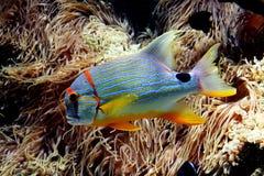 Vissen 6 Stock Foto's