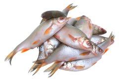 Vissen. Stock Foto