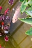 Vissen aan de oppervlakte worden gedreven die stock foto's