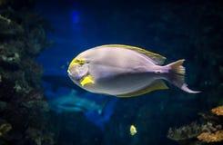 Vissen in aqarium Stock Foto's