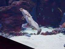 Vissen Aquarium Stock Foto