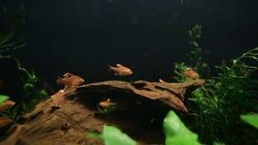 Vissen in aquarium stock videobeelden