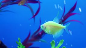 Vissen in aquarium stock footage