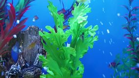 Vissen in aquarium stock video