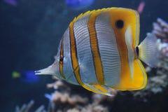Vissen in aquarium royalty-vrije stock afbeeldingen