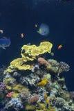 Vissen in aquarium in Frankrijk Stock Afbeeldingen