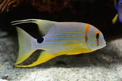 Vissen in aquarium in Frankrijk Stock Foto's