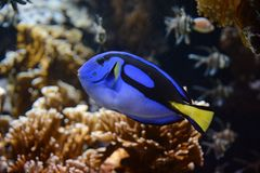 Vissen in aquarium in Frankrijk Stock Afbeelding
