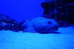 Vissen bij de bodem van de foto royalty-vrije stock foto