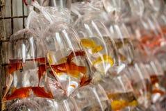 Vissen bij de Hong Kong Goldfish-markt - 3 royalty-vrije stock foto
