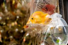 Vissen bij de Hong Kong Goldfish-markt - 6 stock foto