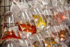 Vissen bij de Hong Kong Goldfish-markt - 4 stock afbeeldingen