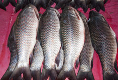 Vissen bij de markt Stock Afbeelding