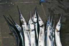 Vissen bij de markt van Vissen Stock Foto
