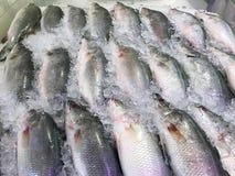 Vissen bij ijsplank het verkopen in markt royalty-vrije stock foto