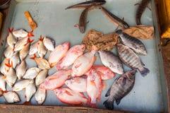 Vissen bij markt Royalty-vrije Stock Afbeeldingen