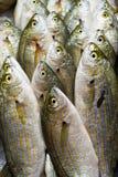 Vissen bij markt voor verkoop royalty-vrije stock foto's