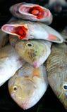 Vissen bij Mexicaanse markt Royalty-vrije Stock Afbeeldingen