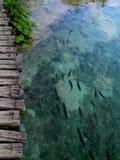 Vissen bij Plitvice-Meren Stock Foto