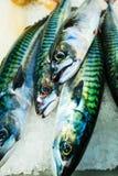 Vissen bij vissenmarkt (Fisketorget) in Bergen, Noorwegen Royalty-vrije Stock Foto