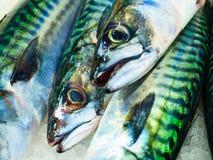 Vissen bij vissenmarkt (Fisketorget) in Bergen, Noorwegen Royalty-vrije Stock Afbeelding