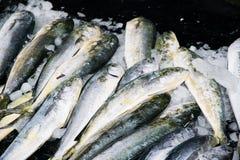 Vissen bij Vissershaven worden verkocht die Stock Foto