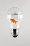 Vissen binnen de Gloeilamp Stock Afbeelding