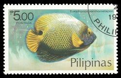 Vissen, Blueface-Zeeëngel stock fotografie