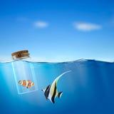 Vissen in de fles stock foto