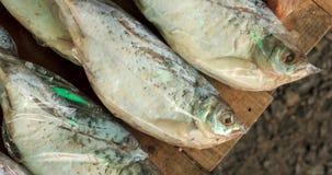 Vissen in de plastic zak Stock Foto