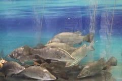 Vissen in de rivier Royalty-vrije Stock Fotografie