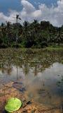 Vissen in de tropische vijver met palsm en de hemel Stock Fotografie