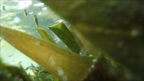 Vissen in de video van de meervoorraad stock videobeelden