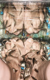 Vissen de vrouwelijke benen van de pedicure garrarufa Royalty-vrije Stock Foto