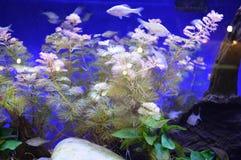 Vissen in de waterplanten Stock Fotografie